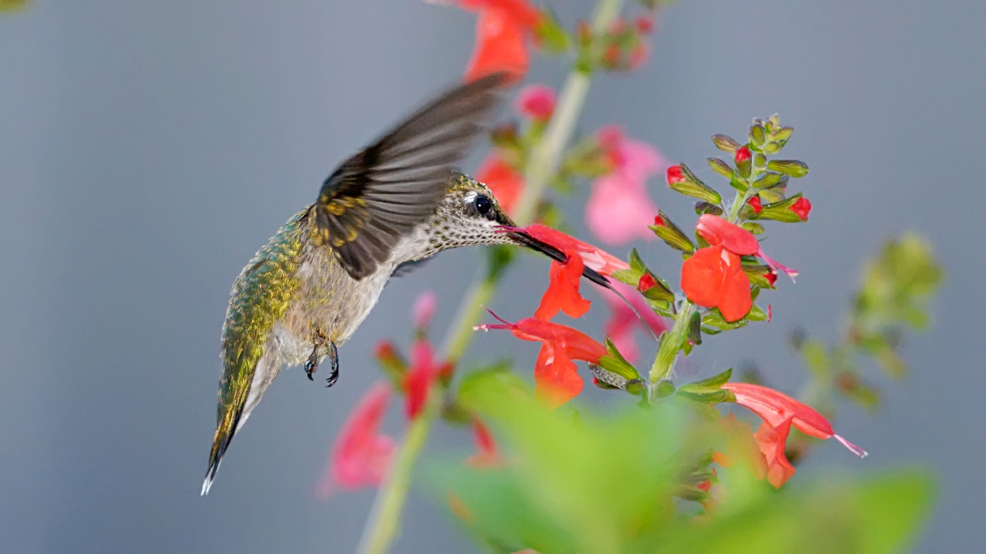 Hummingbirds…life is rich, beauty is everywhere, every personal connection has meaning